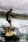 Muskoka Surfboard 2